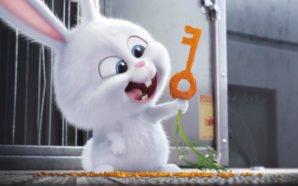 Kaninchen Snowball formt einen Schlüssel aus einer Karotte in Pets