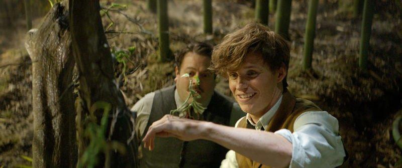 Eddie Redmayne als Newt Scamander und Dan Fogler als Jacob Kowalski betrachten einen Bowtruckle in Phantastische Tierwesen und wo sie zu finden sind