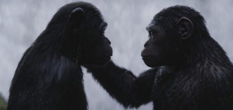 Caesar und Cornelia sprechen in Planet der Affen Survival